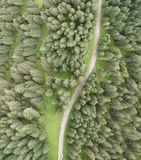 Overhead downward aerial view of forest trees.  stock images