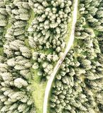 Overhead downward aerial view of forest trees.  stock photography