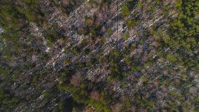 Overhead drone look Through Trees To Swamp in winter with boardwalk. HD stock footage