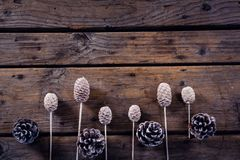 Dry pine cone stick and pine cone arranged on wooden plank Royalty Free Stock Image