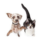 Overhead Photo Cute Kitten and Dog Stock Images