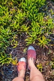 Overhead photo of feet on a background of exotic plants. Women feets view from above.  Exploring, travelling, tourism, leisure. Stock Photo