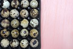 An overhead photo of small quail eggs in the black plastic container on the pink background. Stock Image