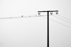 Overhead powerline. Some birds on a overhead powerline Stock Photos