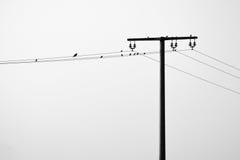Overhead powerline. Some birds on a overhead powerline stock photos