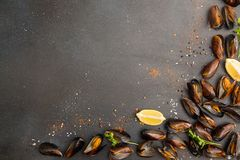 Overhead of row of frilled mussels with lemon and parsley. Healt Stock Images