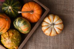 Overhead shot of ornamental gourds and pumpkins in a wood crate royalty free stock images
