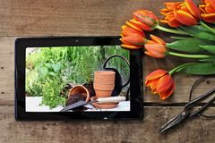 Tablet with Garden Scene and Tulips. Overhead shot a tablet showing terracotta pots and plants ready to be planted in a garden with a bouquet of orange and Stock Images