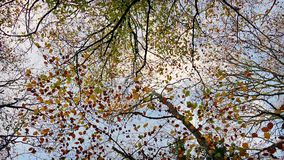 Overhead Trees With Colorful Leaves stock video footage