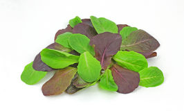 Overhead View Baby Romaine Lettuce Royalty Free Stock Images