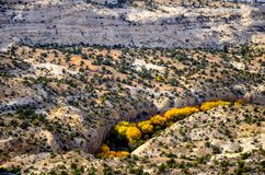 Overhead view of brilliant golden and yellow autumn foliage royalty free stock image