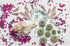 Composition with seashells and colored stones, color impact. Overhead view of a composition on white background with different seashells and some skeletons of royalty free stock photos