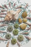 Composition with seashells and colored stones, color impact. Overhead view of a composition on white background with different seashells and some skeletons of royalty free stock photography