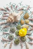Composition with seashells and colored stones, color impact. Overhead view of a composition on white background with different seashells and some skeletons of royalty free stock image
