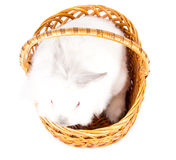 Little white bunny in a basket Royalty Free Stock Photography