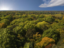 Overhead view of dense forest. Of beech trees with ones in foreground changing color at start of autumn Royalty Free Stock Photos