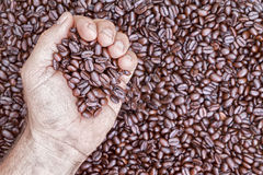 Overhead view of hand holding coffee beans Stock Photography