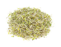 Overhead View Organic Broccoli Sprouts Royalty Free Stock Image