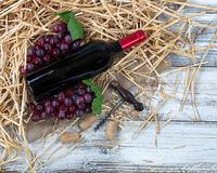 An unopen bottle of red wine plus grapes on top of straw and bur Royalty Free Stock Images