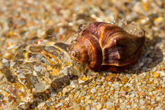 Overhead view of a shell and its shadow on a smooth background of sand Royalty Free Stock Photos