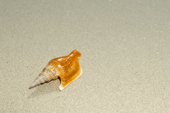 Overhead view of a shell and its shadow on a smooth background of sand Royalty Free Stock Photo