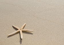 Overhead view of a starfish and its shadow on a smooth background of sand Stock Photo