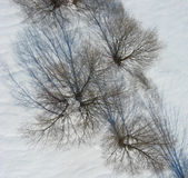 Overhead view of trees and shadows on snow. Trees in winter shot from directly overhead provide an unique abstract view of the world. This picture was taken from stock image