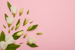Composition of white eustoma with buds at the corner of pink bac stock image