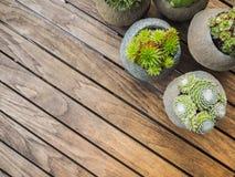 Overheadkosten van een verscheidenheid van 5 verschillende succulents royalty-vrije stock afbeelding