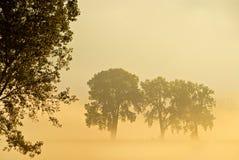 overklig morgon Arkivfoto