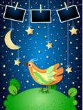 Overklig natt med hängande stjärnor, den färgrika fågeln och fotoramar royaltyfria foton