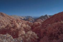 Overklig plats i infraröda färger Arkivfoton