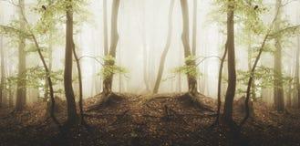 Overklig skog med dimma- och gräsplanlövverk arkivbild