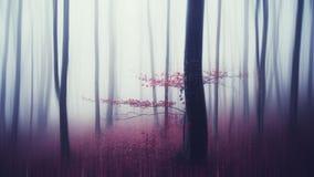 Overklig spökad skog i höst Arkivfoto
