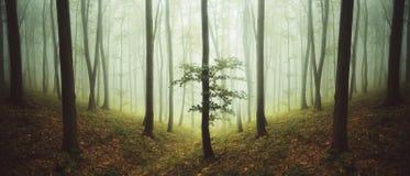 Overklig symmetrisk skog med dimma fotografering för bildbyråer