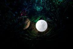 Overkligt fantasibegrepp - fullmåne som ligger i gräs Dekorerat foto Abstrakta felika bakgrunder Arkivbild