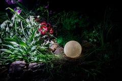 Overkligt fantasibegrepp - fullmåne som ligger i gräs Dekorerat foto Abstrakta felika bakgrunder Arkivbilder