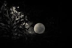 Overkligt fantasibegrepp - fullmåne som ligger i gräs Dekorerat foto Abstrakta felika bakgrunder Arkivfoto