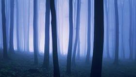 Overkligt foto av skogen med dimma Arkivfoton
