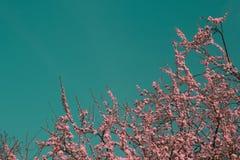 Overkligt infrarött rosa träd royaltyfri foto