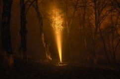 Overkligt ljus i den mörka skogen, magisk fantasilightsin den dimmiga skogen för saga Arkivfoto