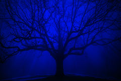 Overkligt träd i vinterblåttdimma