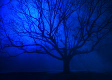 Overkligt träd i vinterblåttdimma arkivfoto