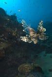Overladen tropische vissen Stock Afbeelding
