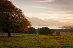 Overlake view at sunset. Low contrast rural scene with tree,green meadow,herd of deer and distant mountains at sunset Royalty Free Stock Photography
