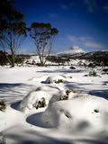 Overland Track. Pure white snow covers the ground on the Overland Track in Tasmania, Australia Royalty Free Stock Image