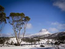 Overland Track. Pure white snow covers the ground on the Overland Track in Tasmania, Australia Stock Photo