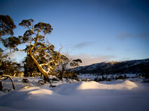 Overland Track Sunrise. Pure white snow covers the ground on the Overland Track in Tasmania, Australia Royalty Free Stock Photo