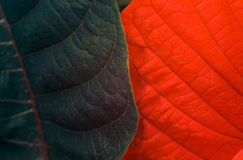 Overlapping leaves Stock Images