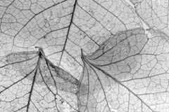 Overlapping leaves texture Stock Photos